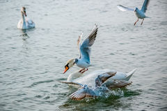 Vögel des Meeres Stockfoto