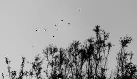 Vögel, die über Bäume fliegen Stockbild