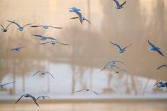 Vögel, die über den See fliegen Stockfotografie