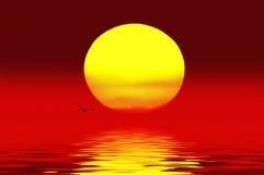 Vögel, die über den sunset.on See fliegen Stockfotografie