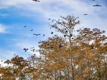 Vögel, die über einen Baum in den Sümpfen fliegen lizenzfreies stockbild