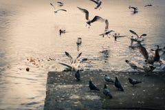 Vögel, die über Gebiet kämpfen lizenzfreies stockfoto