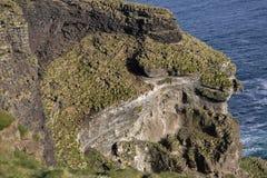 Vögel, die auf den Klippen von Vestmannaeyjar nisten Lizenzfreies Stockbild