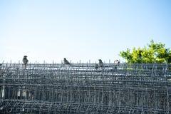 Vögel, die auf einem Zaun im Sommer sitzen Lizenzfreies Stockbild