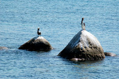 Vögel, die auf Felsen, nahe Acapulco, Mexiko setzen Stockfotografie