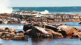Vögel, die auf Felsen nahe bei dem Zerbrechen des Meereswogen sitzen stock video footage