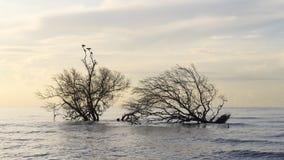 Vögel, die auf Mangrovenbäumen sitzen Stockbild