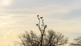 Vögel, die auf Mangrovenbäumen sitzen Stockfotos