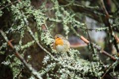Vögel, die in den Büschen nisten lizenzfreie stockbilder