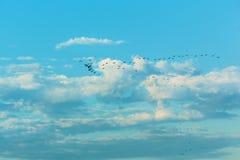 Vögel, die in den blauen Himmel fliegen Stockfotos