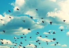 Vögel, die in den blauen Himmel fliegen Stockfoto