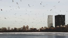 Vögel, die in den Himmel von Manhattan fliegen lizenzfreies stockfoto