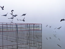 Vögel, die durch den Nebel auf Ada See in Belgrad fliegen Stockfotografie
