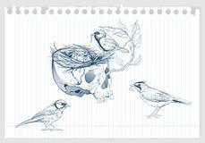 Vögel, die ein Nest im Tierschädel machen Stockfoto