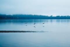 Vögel, die entlang ruhiges Wasser fliegen lizenzfreie stockbilder