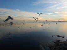 Vögel, die herum fliegen lizenzfreies stockfoto