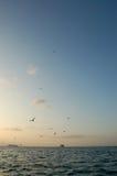 Vögel, die hoch über den Ozean fliegen Stockfoto