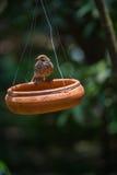 Vögel, die Lebensmittel essen Stockfotografie