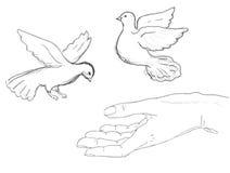 Vögel, die nahe menschlicher Hand fliegen stock abbildung