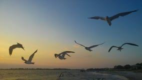 Vögel, die am Strand fliegen lizenzfreies stockfoto