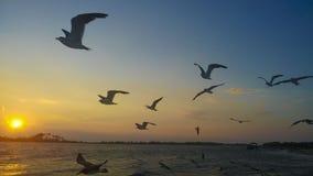 Vögel, die am Strand fliegen lizenzfreies stockbild