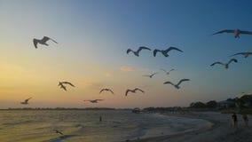 Vögel, die am Strand fliegen lizenzfreie stockfotos