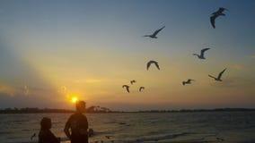 Vögel, die am Strand fliegen lizenzfreie stockbilder