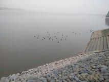 Vögel, die in sukha Mangel schwimmen stockfotos