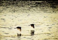 Vögel, die in Synchronisierung fliegen Lizenzfreies Stockfoto
