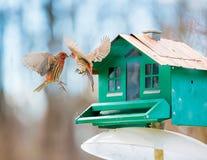 Vögel, die vor Vogelhaus fliegen Stockbilder
