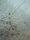 Vögel in einem Baum Stockfotografie