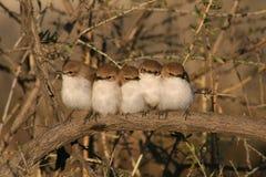 Vögel in einer Unordnung Stockfotos