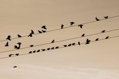 Vögel in einer Zeile Stockfotos