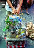 Vögel für Verkauf Stockfotos