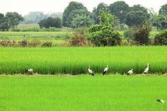 Vögel finden Nahrung Lizenzfreie Stockfotografie