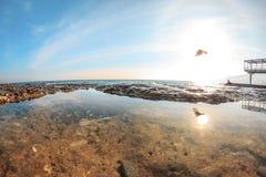 Vögel fliegen über Meerwasser bei Sonnenuntergang Lizenzfreies Stockfoto