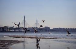 Vögel fliegen über Wasser nahe der Brücke lizenzfreies stockfoto