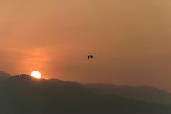 Vögel fliegen bei Sonnenaufgang hinter die Berge Lizenzfreie Stockbilder