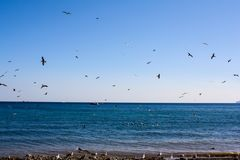 Vögel fliegen durch das Meer lizenzfreie stockbilder