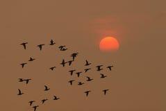 Vögel fliegen am Sonnenaufgang Stockbilder