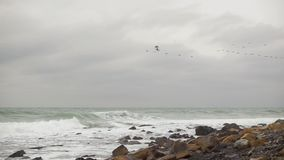 Vögel fliegen weg gegen das Meer langsames MO stock video footage