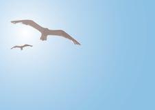 Vögel gegen Sonne Stockfotos