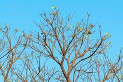 24 Vögel gehockt auf Niederlassungen eines Baums Lizenzfreie Stockbilder