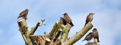 Vögel im Baum lizenzfreies stockfoto