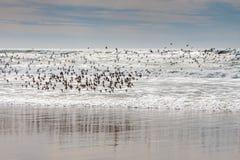 Vögel im Flug über dem Meer lizenzfreie stockbilder