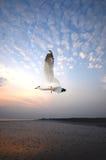 Vögel im Flug. lizenzfreie stockbilder