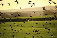 Vögel im Flug Stockfotografie