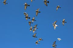 Vögel im Flug stockbild