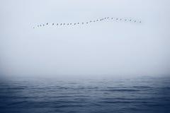 Vögel im Himmel über dem Meer Stockfotos