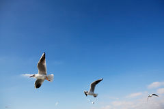Vögel im Himmel Stockfoto